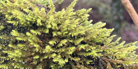 Bryophytes: Field Identification Course 2021 tickets