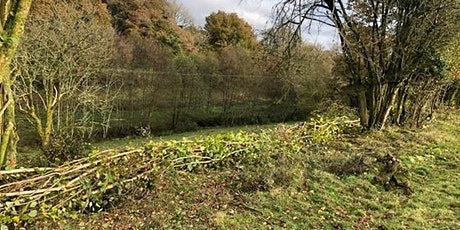 Saving Devon's Treescapes: Tree planting funding advice with FWAG SW tickets