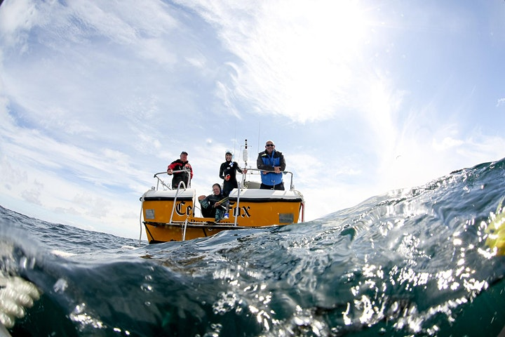 SWIM WITH BLUE SHARKS ( £180 PP) £60 DEPOSIT TO BOOK. image