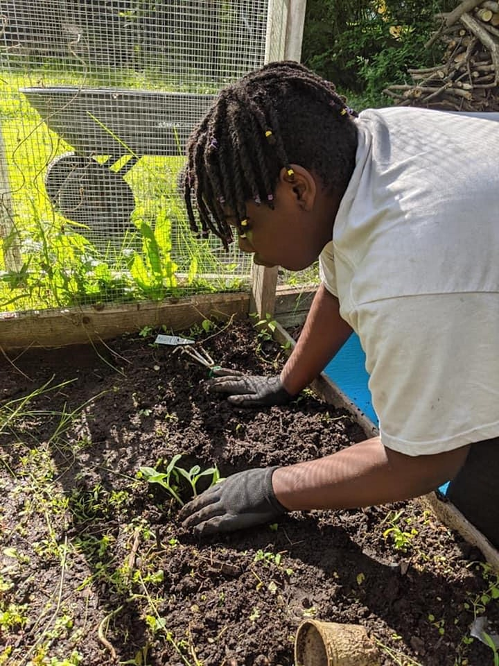 Victory Gardens: Growing for the Common Good image