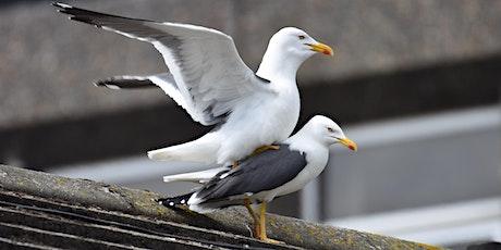 *Postponed* Urban gulls: not just stealing your sandwich tickets