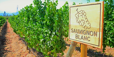 In-depth: Sauvignon Blanc tickets