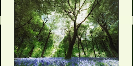 Mindful Photography in Bluebells tickets