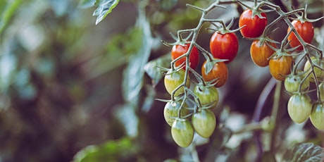 Garden Workshops - Tomato Care: Pruning and Trellising tickets