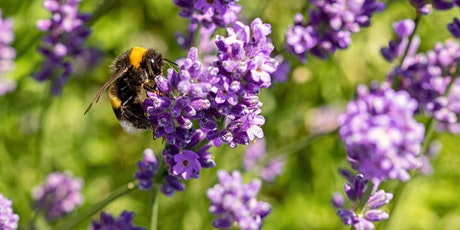Virtual Garden Workshops - Know Your Pollinators tickets
