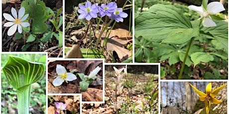 Spring Wildflower Walk, Turkey Run State Park tickets