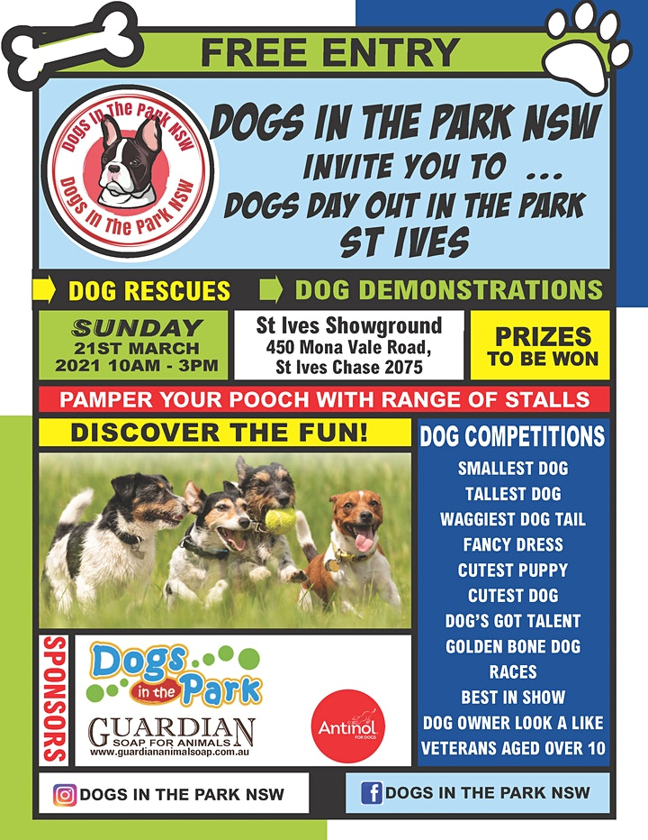 Dogs In the Park St Ives 2021 image