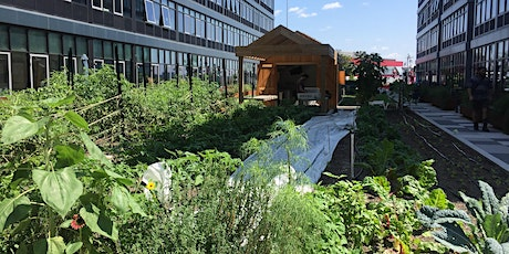 Urban Agriculture Farmer Forums: Zoning tickets