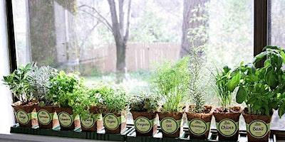 Jr. Garden Club-  Windowsill Herb Garden