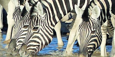 Southern Africa Wildlife Safari - Namibia, Botswana and Zimbabwe tickets