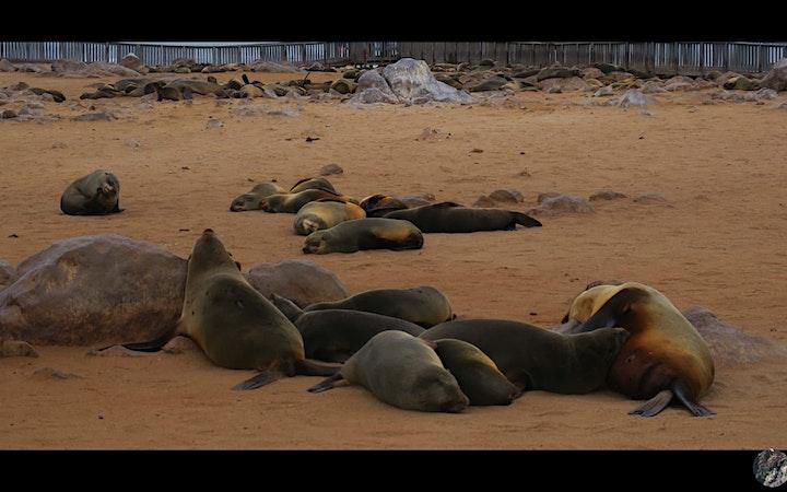 Southern Africa Wildlife Safari - Namibia, Botswana and Zimbabwe image