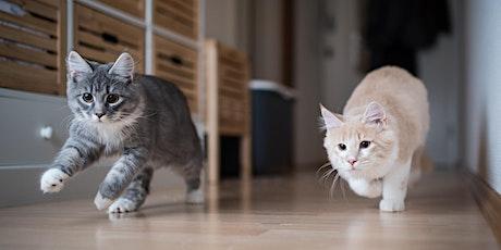 Wellness Workshop: Understanding Our Indoor Cats tickets