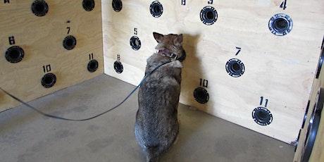 American Schutzhund (AS) Detection Training tickets