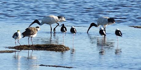 Birds of Belmont Wetlands walk tickets