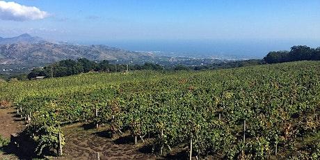 Etna & Wine Murgo - Experience biglietti