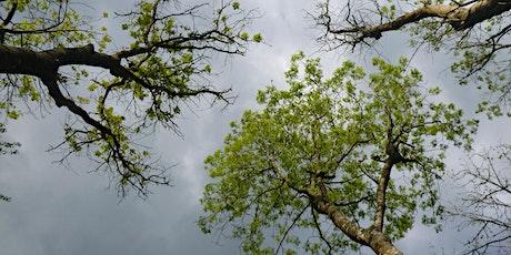 Forestry Commission SE&L management of ash dieback best practice forum 2021 biglietti