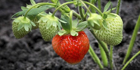 Grow your own Organic Fruit tickets