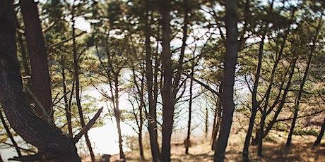Forest Bathing.   - Spring Walking Festival tickets
