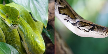 VIRTUAL ST PATRICK'S DAY EVENT WITH DUBLIN ZOO EXPLORE THE WORLD OF SNAKES! tickets