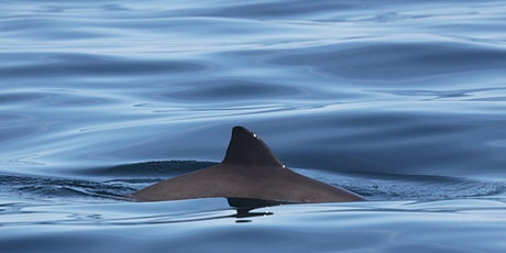 "Sea Watch April Survey - Sand Point ""Porpoises and Poetry"" tickets"