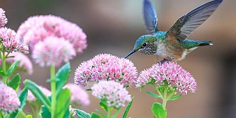 Hummingbird Gardening with Songbird and the Orchid tickets