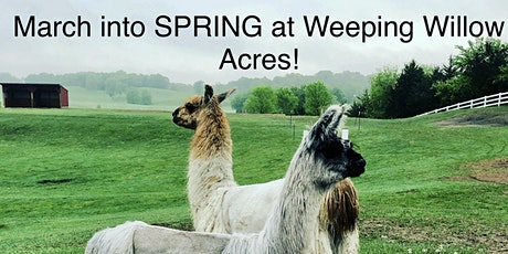 March into SPRING  at Weeping Willow Acres w/ LLAMAS & Farm Animals! tickets