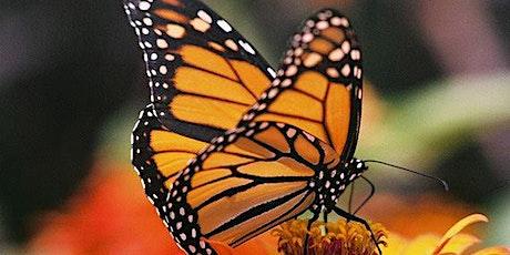 Butterfly & Pollinator Habitats ONLINE tickets