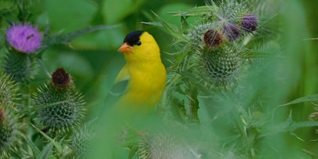 Spring Bird Walks tickets
