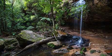 Forest & Waterfall Bathing Walk in Blue Mountains tickets