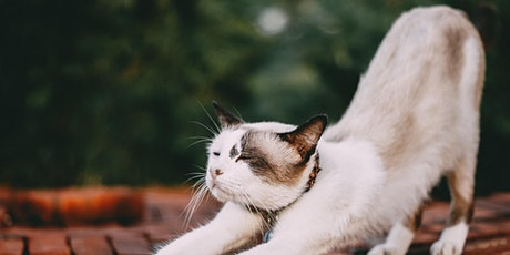 Kitten Yoga - Youth Week event (Ages 12-18) tickets