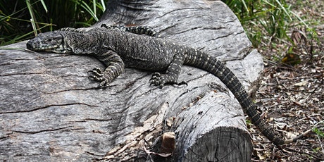 Lifestyles of the cool and scaly:  Open forest reptile neighbours tickets