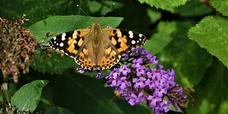 Wildflowers for Butterflies and Moths tickets