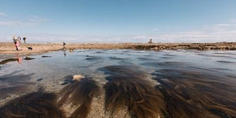 Towers Tides and Turnstones - Spring Walking Festival tickets