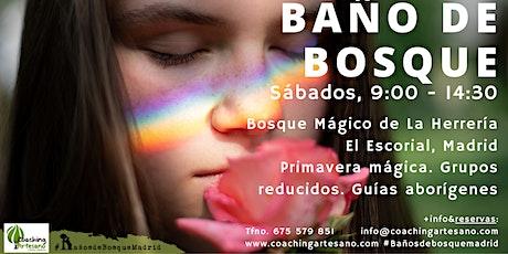 Baño de Bosque sáb. 5 junio Primavera Bosque La Herrería El Escorial entradas