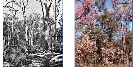 RSWA monthly talk: Tree deaths - a cold case review of jarrah deaths tickets