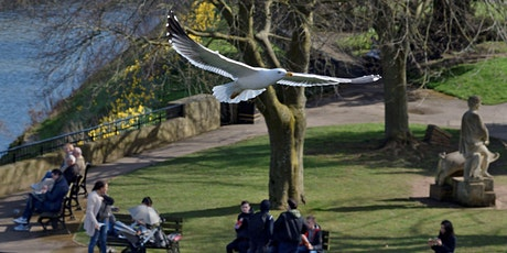 Bitesize Bird ID - Parks and Green Spaces - Online Event tickets
