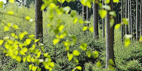 Policy challenges: integrating biodiversity conservation in managed forests tickets