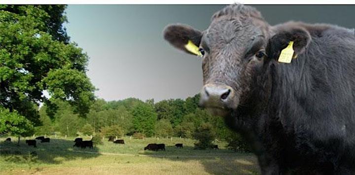 In Touch Animal - ätherische Öle und ihre sichere Anwendung bei Stalltieren: Bild