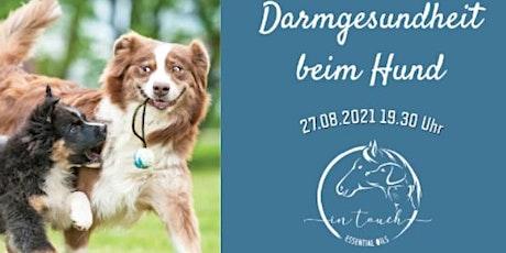 In Touch Animal - Darmgesundheit Hund Tickets