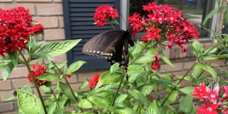 Pollinator Planting for Earth Day tickets