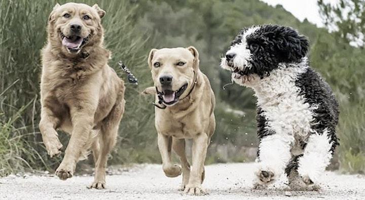 In Touch Animal - Darmgesundheit Hund: Bild