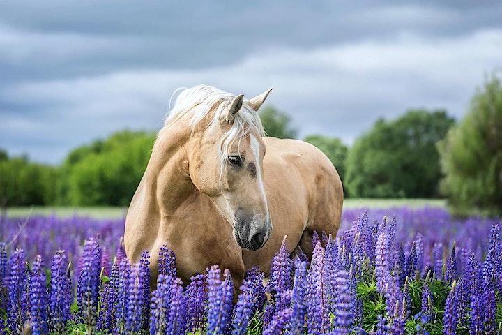 In Touch Animal - Darmgesundheit Pferd: Bild