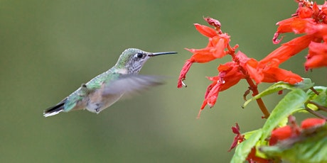Native Plants to Attract Hummingbirds - Virtual Workshop with Plant tickets
