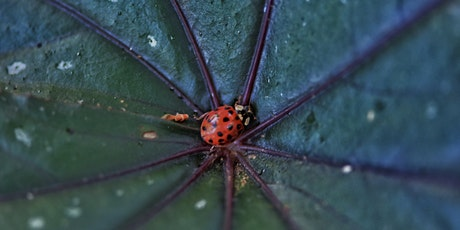 Beneficial Bugs for Your Garden - Virtual Workshop with Beneficial Bug tickets