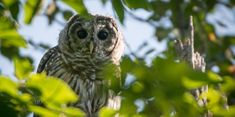Observing Maine's Owls: nest boxes, atlasing, and more. tickets