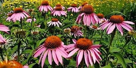 Plant Walk Series: Pollinator Meadow - In-Person Workshop tickets