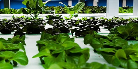 What's Growing in Winter?  Virtual Farm Tour #3 - Aquaponics! tickets