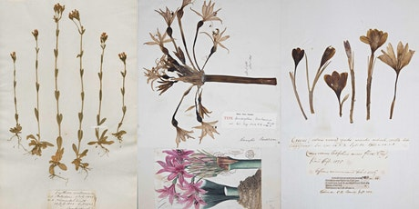 300 years of fieldwork: the plants of Cambridgeshire & the World in 1 room! tickets