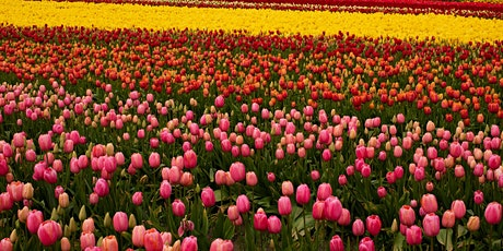 Easter Tulip Photo Session tickets