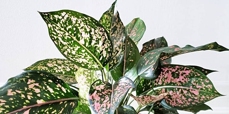 Melbourne - Huge Indoor Plant Warehouse Sale - Pink Plant Party tickets